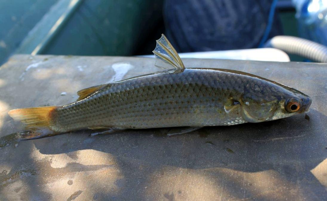 Летняя рыбалка на Азовском море: кого, когда и где ловить