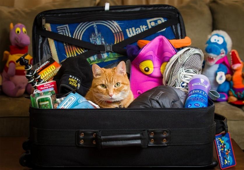 Какие вещи взять в летний лагерь?
