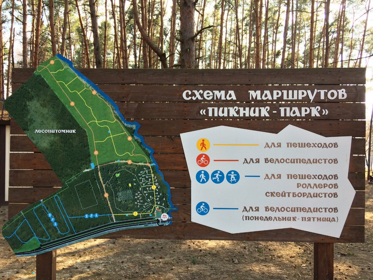 Сосновый лес в 15 минутах от Белгорода со всем необходимым для отдыха