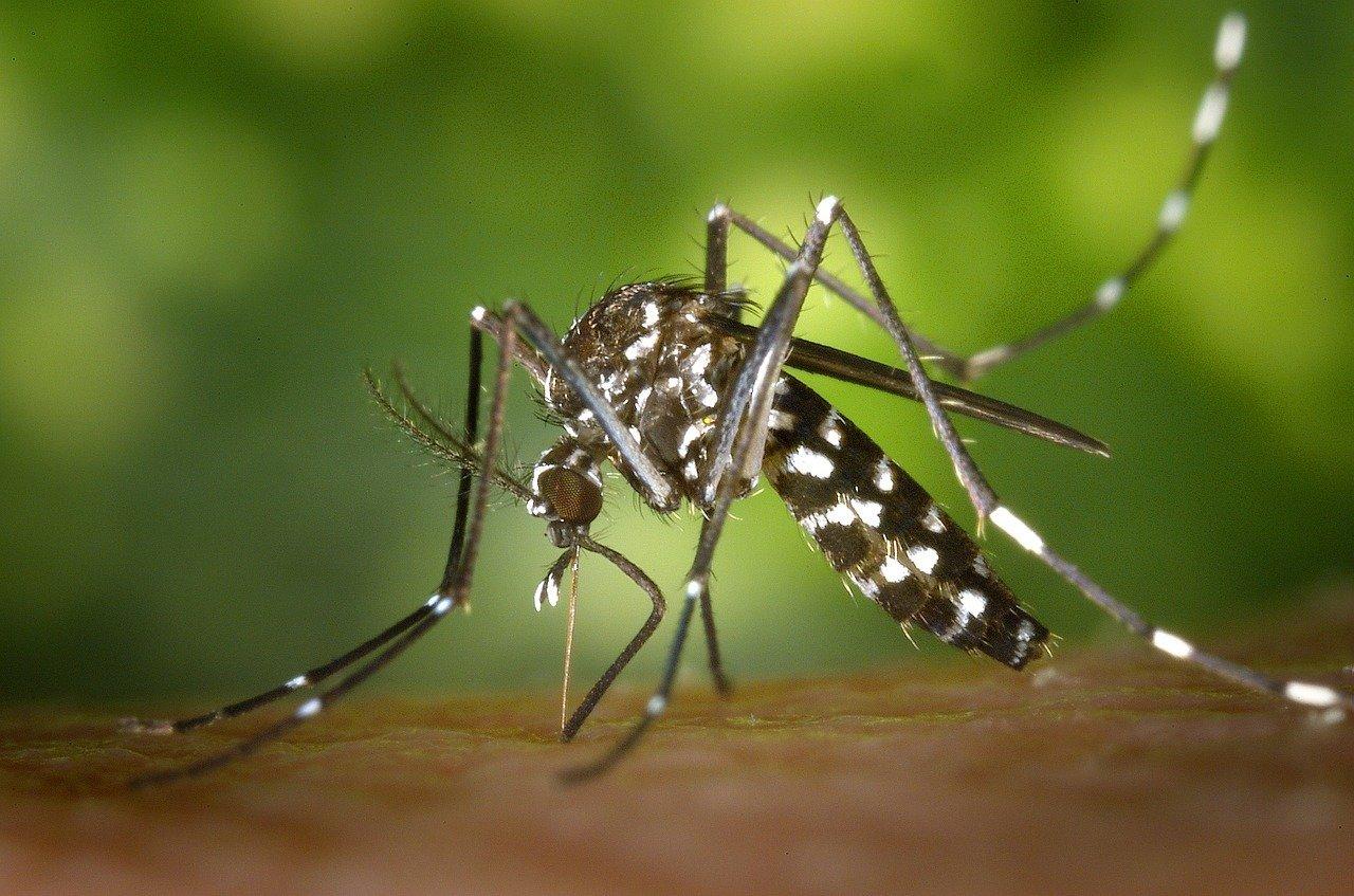Как бороться с комарами на природе без помощи «химии»