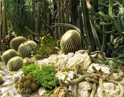 Никитский ботанический сад: стоит ли его посетить?